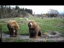 Привет от медведя