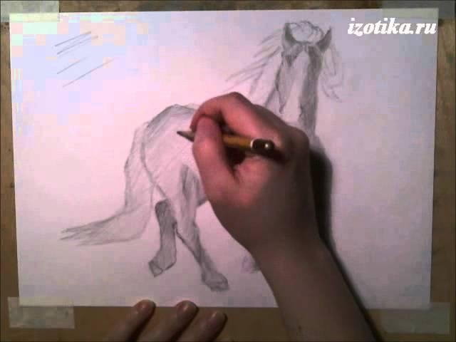Лошадь. Графика