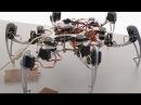 Бионика Способы передвижения