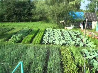 Вот такой он - Красивый огород на даче