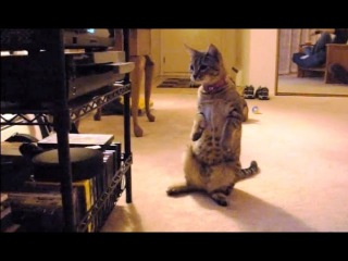 Cats Confused by DVD Drives Compilation