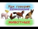 Развивающий мультик для детей Как говорят домашние животныекто как делаетКак...