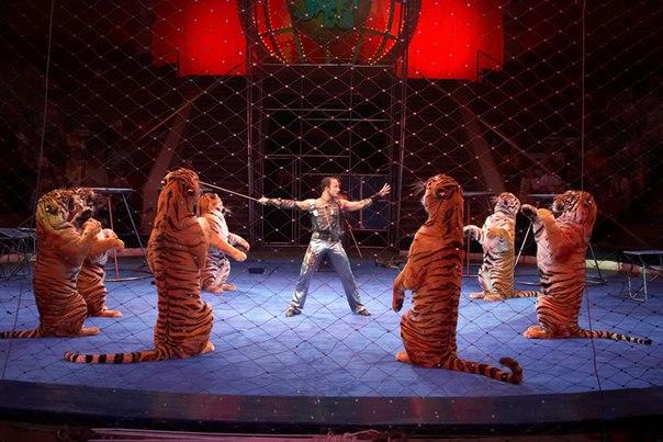 http://www.circus-chelyabinsk.