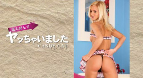 Kin8tengoku 1347 CANDY CAT
