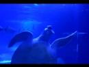 Черепаха - СУПЕР! Кушает и танцует