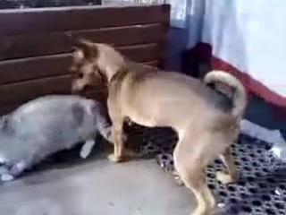 Dog and Cat has real Sex!! - YouTube
