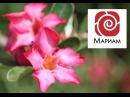 Медитация - Мама. Женское начало. Исцеление для мужчин и женщин.