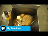 BIG BLUE LIVE The Biggest Heart Ever Preserved - A Blue Whale's! PBS