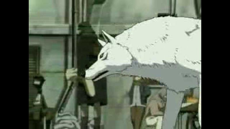 Кошка сашка белая волчица