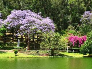 Сиреневый туман цветущего дерева Жакаранда - И Кружалин саксофон