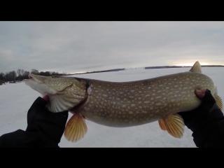Ловля щуки на балансир. Зимняя рыбалка на Волге. Видео отчет от 16.01....