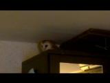 Крик совы сипухи Хиро