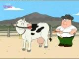 Клеймит корову