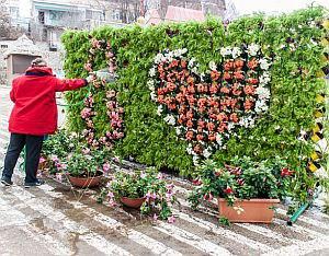 Севастополь начал празднование Женского дня выставкой цветов (ФОТОРЕПОРТАЖ)