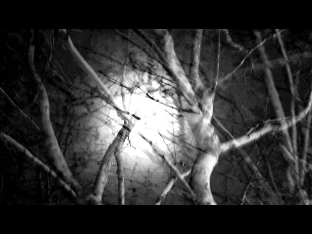 WLADYSLAW - Dos Agujas