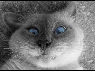 Кошачья тоска. Классная песенка - Funny cat. Good song