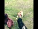 Первая самостоятельная прогулка в парке для собак! Первые знакомства )