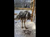 Африканский страус в минус 25
