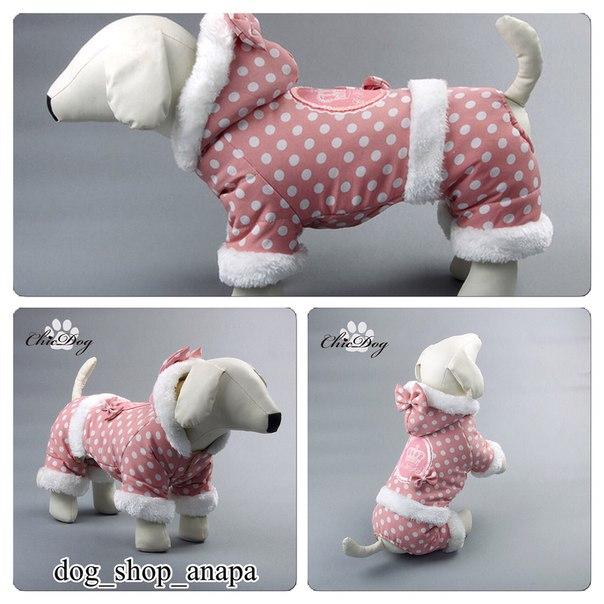 Интернет магазин одежды для собак 9M_iosF-8Yg