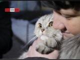 Спасение замурованной в бетон кошки #вкдобро