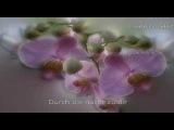 Nana Mouskouri - Serenade