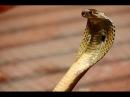 Змеи - неприкасаемая красота