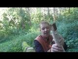 Fox - Полуполтинный рэп Выпуск 5 ( Галат,1Klass,Витя Ак 47 и прочая шляпа)