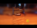 Funny Cats - A Funny Cat and Dog Videos Compilation, Cat fails 2016 __ NEW HD