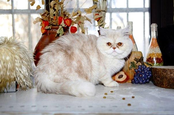 Картинки по запросу Уютное кафе с кошками в Москве «Солод»