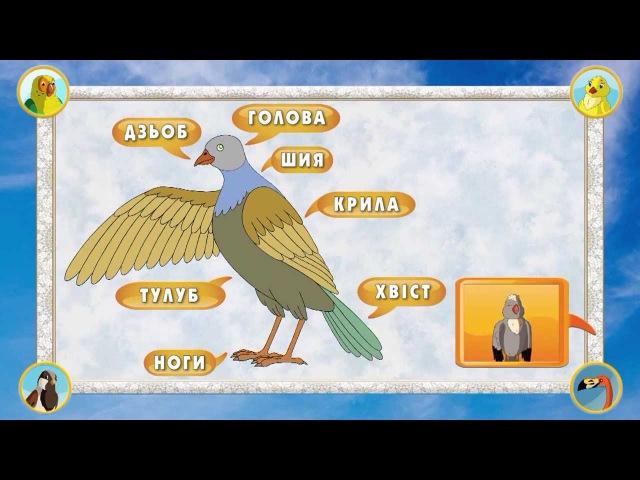 Мультіпедія птахів. Глава 1