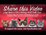 Угрюмый кот, Полковник Мяу, Кот Нала, Оскар слепой кот, Гамильтон :3