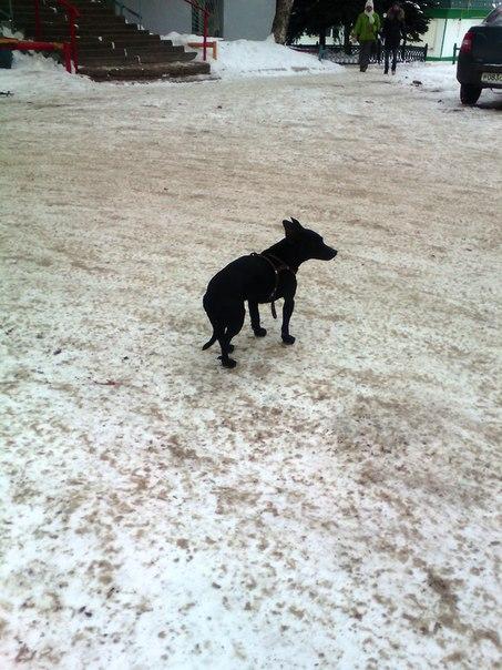 Кто потерял собаку? С утра ходит в 25 мкр. возле тамографии. Замерз.