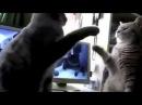 Süße Katzen spielen backe backe Kuchen. Witzig, Lustig, Sweet