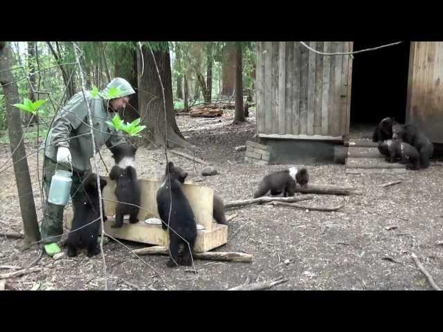 Пажетнов Вася и медвежата Pazhetnov Vasya bear cubs