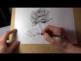 Как нарисовать розу карандашом поэтапно. Красивая роза