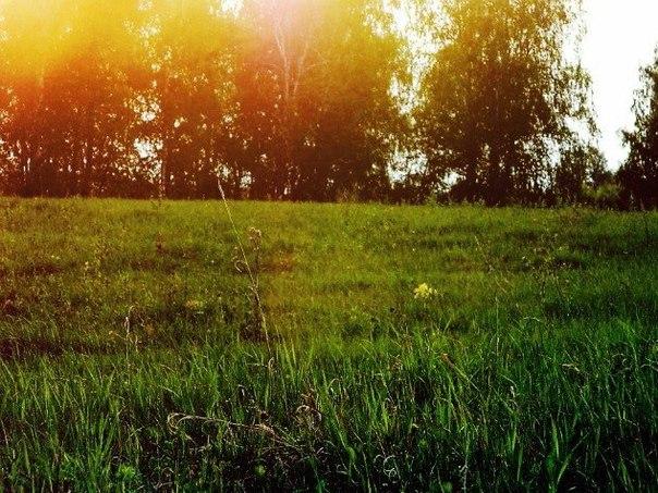 Западносибирская лайка и другие в Челябинской области - Страница 19 Pn9ttT7Ap9s