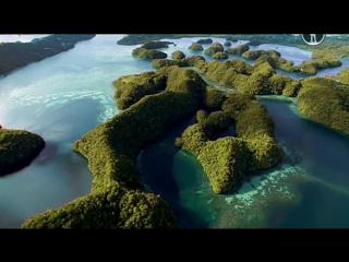 BBC | Чудеса жизни | Серия №1 - Wonders of Life (2013)