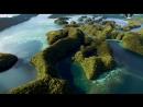 BBC Чудеса жизни Серия №1 Wonders of Life 2013