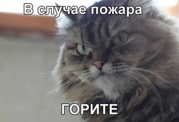 http://cs629413.vk.me/v629413999/3f404/gcjPb9GPOgg.jpg