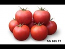 Семена Китано. Выращивание низкорослого томата KS 835 F1