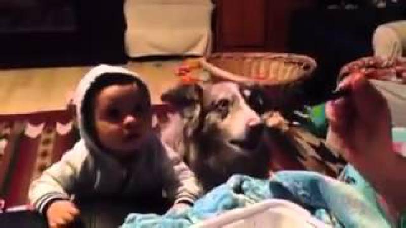Mama diyemeyen bebek ve mama diyen köpek