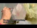 Видеоурок Гарри Дженкинса Классическая мускусная роза
