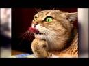 Топ 10 смешных котиков 2015.