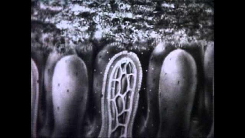Обмен веществ и энергии в клетке