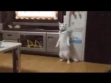 Кот оборотень превращается в хз кого. Или это кот - Терминатора. Возможно это кот Чака Нориса. Пишите в комменты, что думаете по