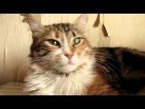 Кошачья экзистенция