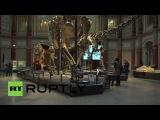 Германия: Первый в истории реплика Спинозавр скелета парад Берлин.