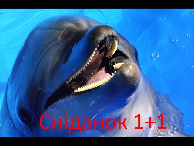 Сніданок 1 1 в гостях у Киевского дельфинария Немо