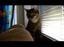 Кот повторяет! - Видео Dailymotion