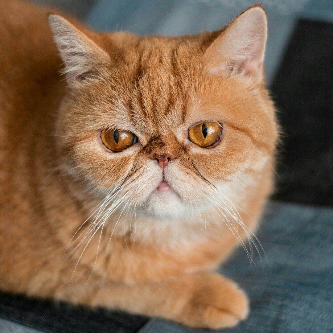 Если кот лижет рану до крови после кострации